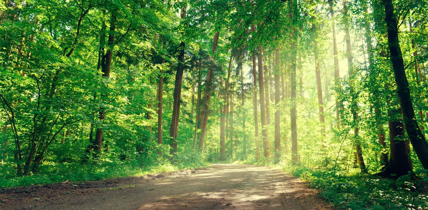 L'uomo è come un albero e in ogni suo inverno levita la primavera che reca nuove foglie e nuovo vigore.