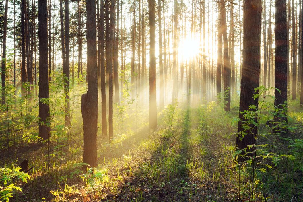 Il mattino della vita e' come l'alba di un giorno, pieno di purezza, visioni e armonia.