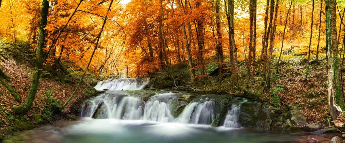 Gli alberi hanno una vita segreta, che si rivela solo a coloro che sono pronti a salirci.